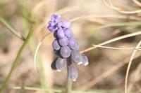 Рослини_11